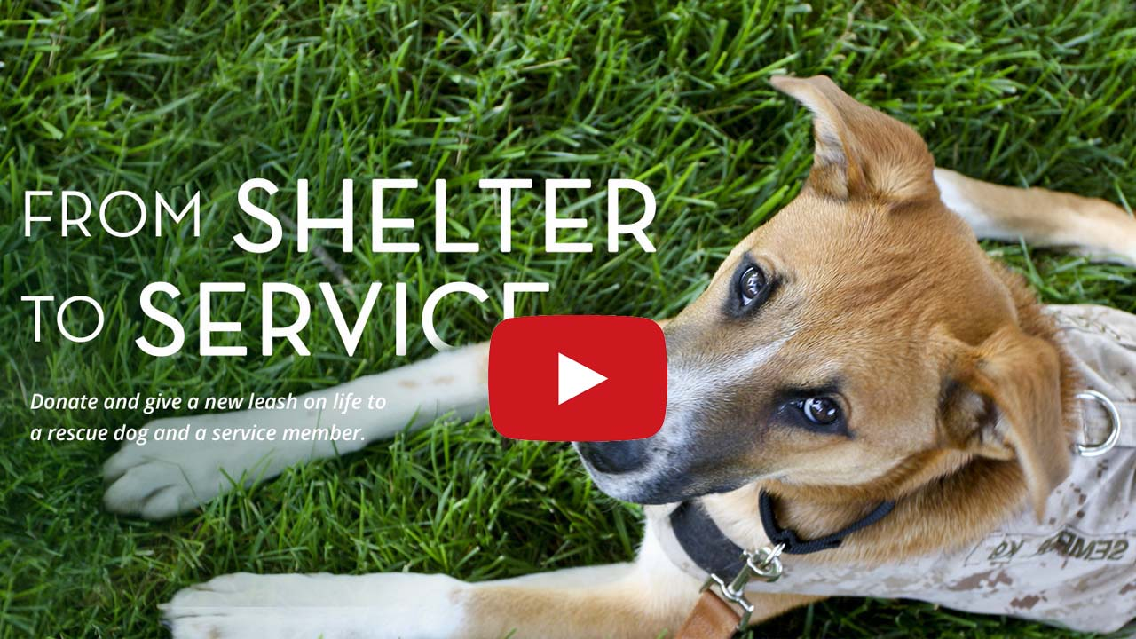 Shelter to Service Video Preiew