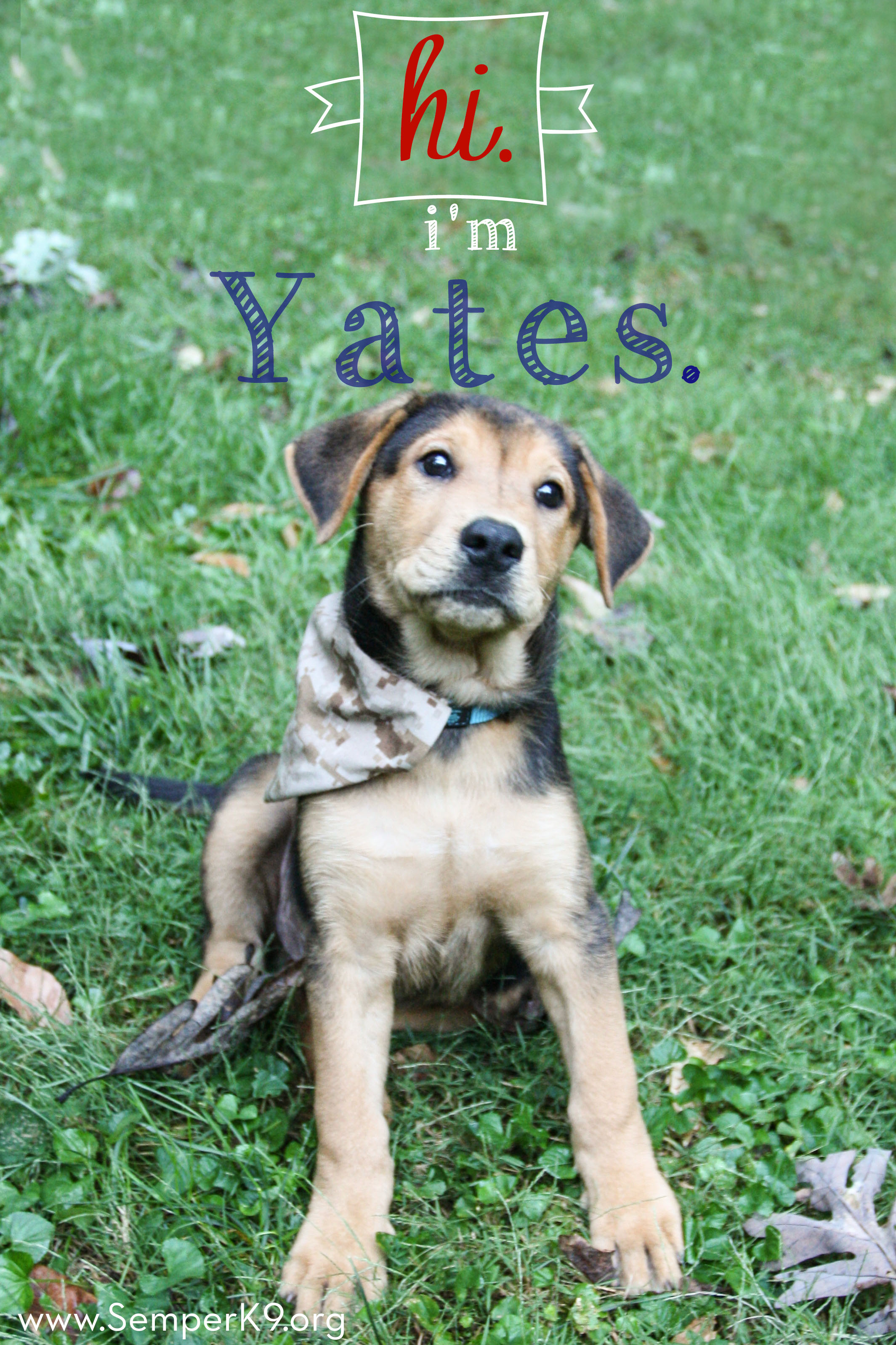 semper-k9s-yates-photo