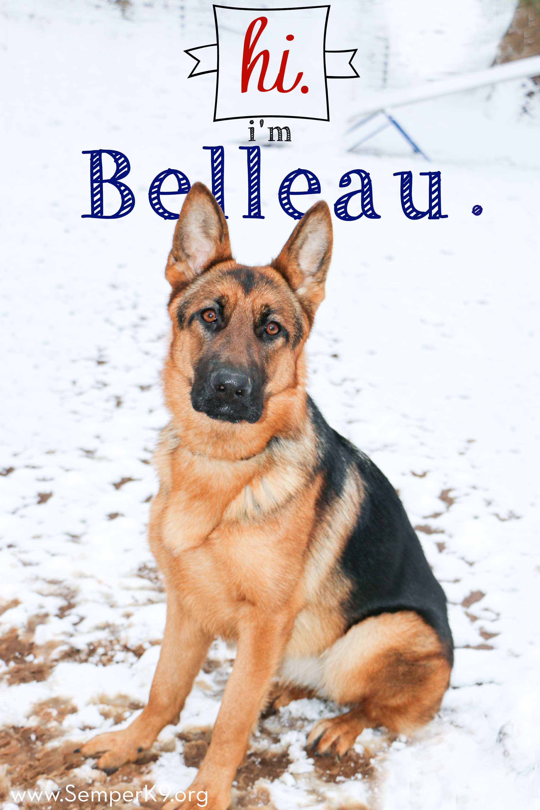 Semper K9s Belleau for web