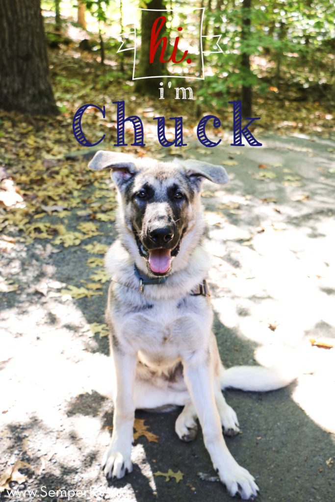 Semper K9s Chuck for Website